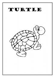 English Worksheets: Turtle