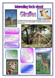English Worksheets:  Interesting facts about giraffes! - did you know that ...