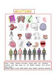 English Worksheets: Anatomy