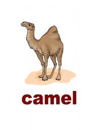 English Worksheets: Animals Vocab