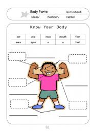 English Worksheets: Know Your Body