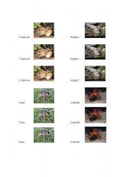 English Worksheets: Animal Memory