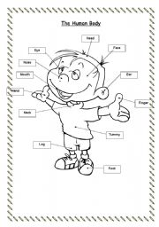 English Worksheets: Parts of the body (flashcard & worksheet)
