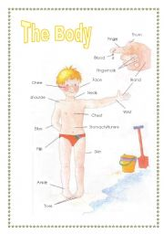 English Worksheets: the body (2sheets)