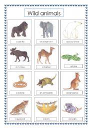 English Worksheets: voc wild animals (2)