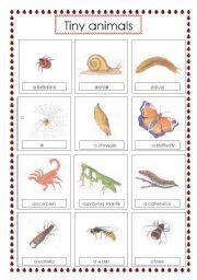 English Worksheets: tiny animals voc