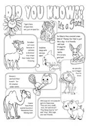 English Worksheet: Interesting Facts About Animals