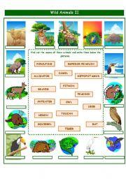 English Worksheet: WILD ANIMALS PART 2