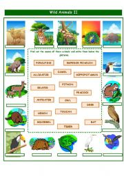 English Worksheets: WILD ANIMALS PART 2