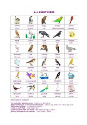 English Worksheets: All about birds