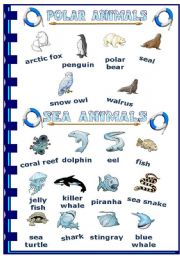 English Worksheets: Polar and sea animals