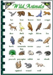 Wild Animal Pictures With Names | Info