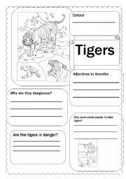 English Worksheets: Tigers
