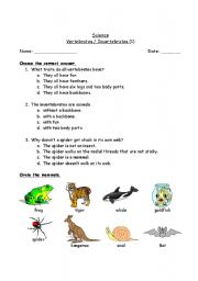 English Worksheets: Vertebrates / Invertebrates