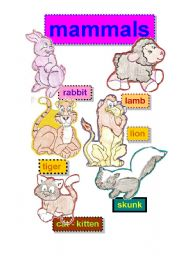 English Worksheet: mammals flashcards #1- rabbit-lamb-tiger-lion-cat-kitten-skunk