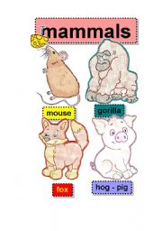 English Worksheet: mammals - flashcards #2 - mouse-gorilla-fox-hog-pig