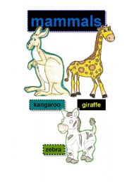 English Worksheet: mammals #3 - flashcards - kangaroo-giraffe-zebra