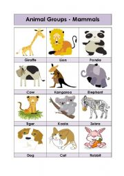 English Worksheet: Animal Groups-Mammals (1-5)