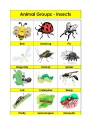 English Worksheet: Animal Groups-Insects (2/5)