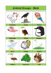 English Worksheets: Animal Groups-Birds (4/5)