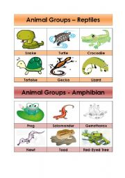 English Worksheet: Animal Groups-Reptiles and Amphibians (5/5)