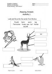 English Worksheet: Animals Parts of the body