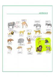English Worksheets: Animals- Part II