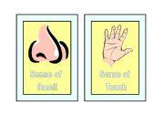 English Worksheets: Five Senses