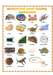 English Worksheets: Armored and Spiky Animals