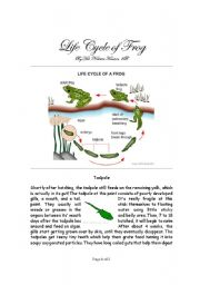 English Worksheet: Life Cycle of Frog