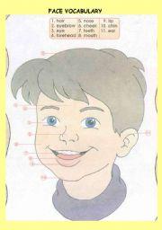 English Worksheet: FACE