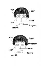 English Worksheets: Face activity part 1