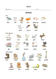 English Worksheet: Animals (Pets, Farm, Wild)