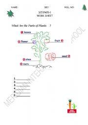 English Worksheet: parts of plant
