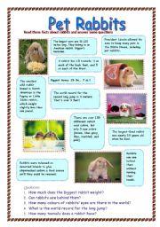 English Worksheets: Pet Rabbits (28.07.08)
