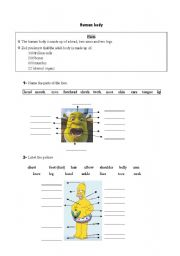 English Worksheets: Human body