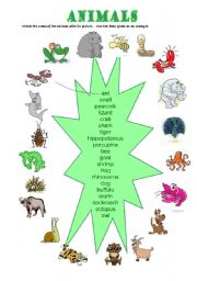 English Worksheets: The annimals
