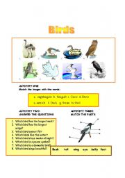 English Worksheets: BIRDS
