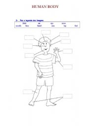 English Worksheets: Parts of the human body
