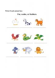 English Worksheets: FUR, SCALES OR FEATHERS