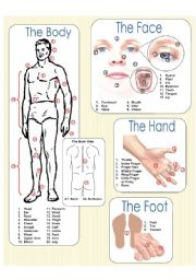 English Worksheet: The Body Picture Dictionary