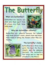 English Worksheets: The Butterfly