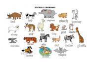 English Worksheets: Animals Groups
