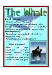 English Worksheet: The Whale