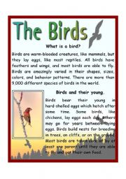 English Worksheets: The Birds
