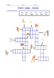 English Worksheets: Body Criss - Cross