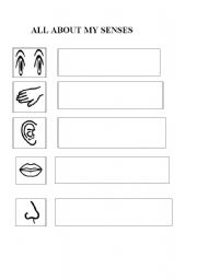 English Worksheets: my senses