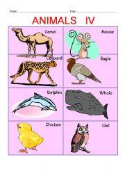 English Worksheets: ANIMALS PART IV