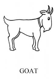 English Worksheets: goat flashcard