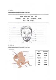 English Worksheets: your body and face